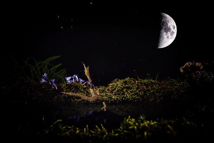 Rana saltando en un paisaje nocturno